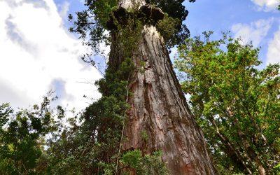 Tu ayuda es clave para reforestar Chile